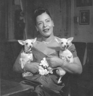 chihuaha billie holliday