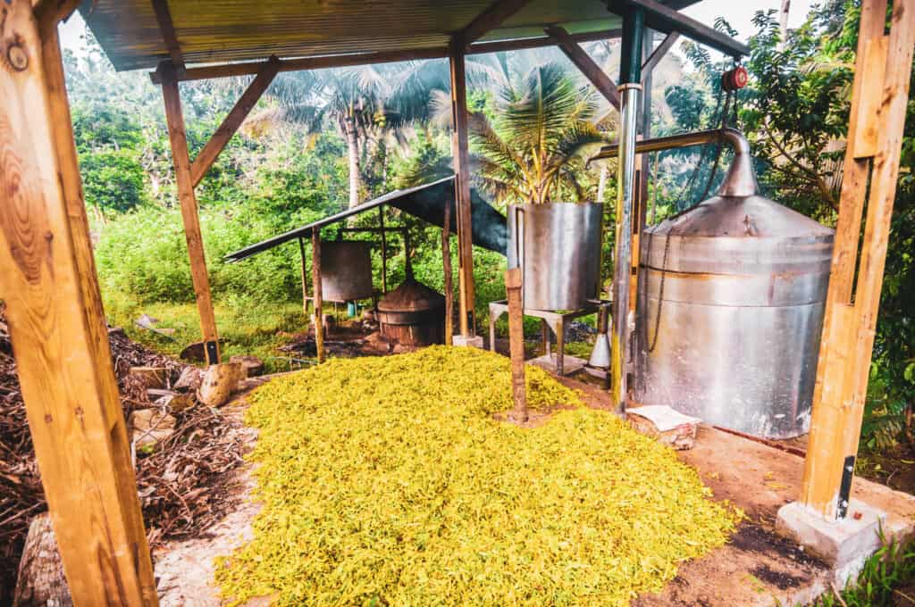 Ylang-Ylang Essential oils distillery