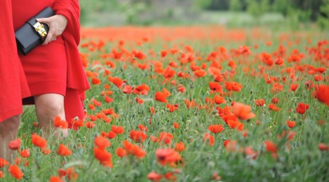knee high poppies