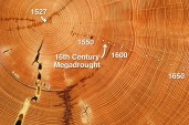 Every year trees grow a new layer of bark. When you cut through a tree you can see these different layers as rings. The thicker the ring the better the growing conditions were that year. That allows scientists to work out what the temperature, precipitation and carbon dioxide levels are likely to have been for each year.
