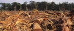 Deforestation in the Amazon for farm land