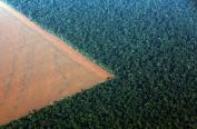 The Amazon rain forest (R), bordered by deforested land prepared for the planting of soybeans, is pictured in this aerial photo taken over Mato Grosso state in western Brazil, October 4, 2015. REUTERS/Paulo Whitaker