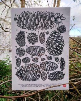 pinecone woodcut print