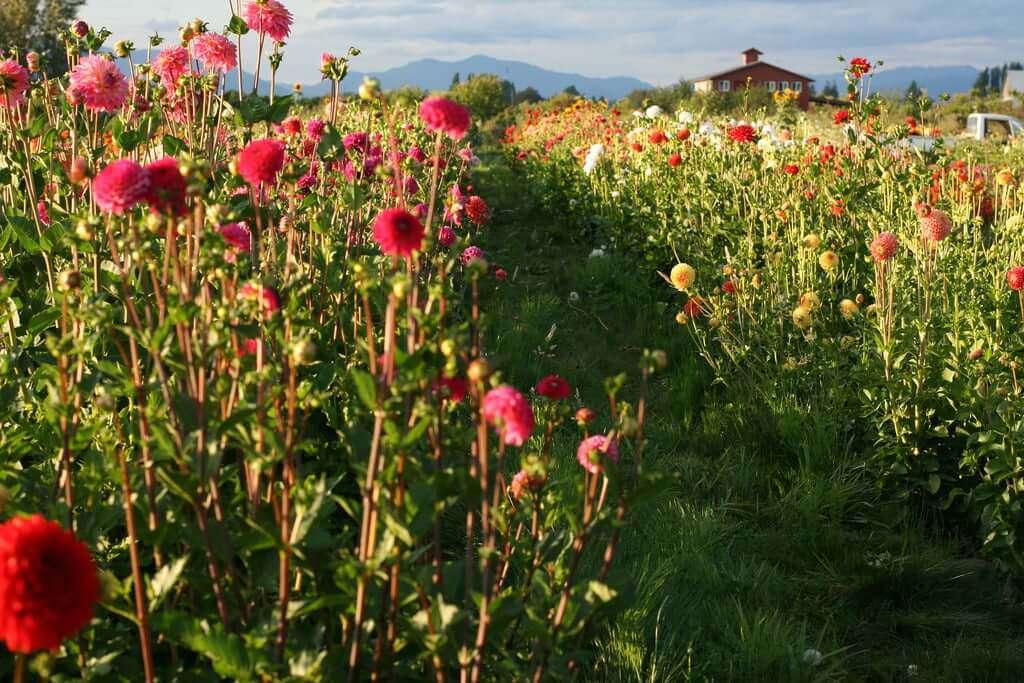 flower farm photo