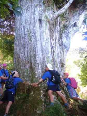 School children link arms around old tree