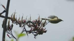 Bird Watching and Photography Akaroa