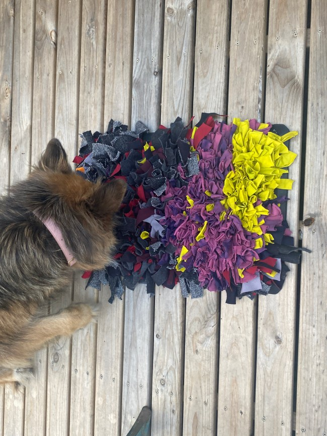 Long haired German Shepherd dog finding treats in the snuffle rug. The snuffle rug is made with brightly coloured knit fabric.