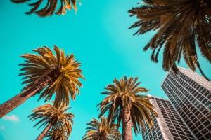 Living LA Like A Local: Hot Favs