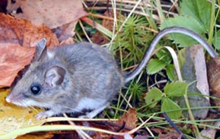 Hantavirus infects Inyo County resident | The Sheet