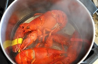 How To Cook, Crack and Eat a Lobster ⋆ The Shore Blog