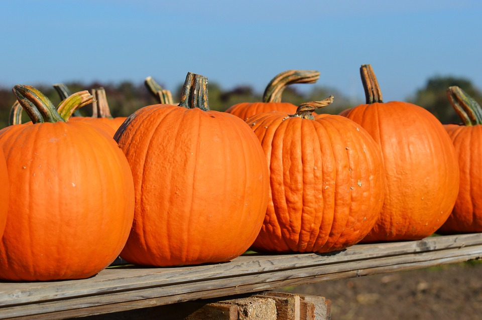 Fall Family Festivals and Events 2018