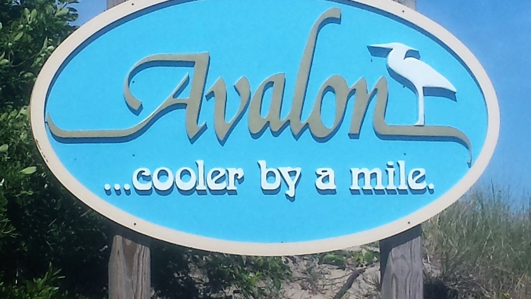 Free Weekly Summer Events in Avalon