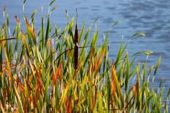 wetlandsinstitute2