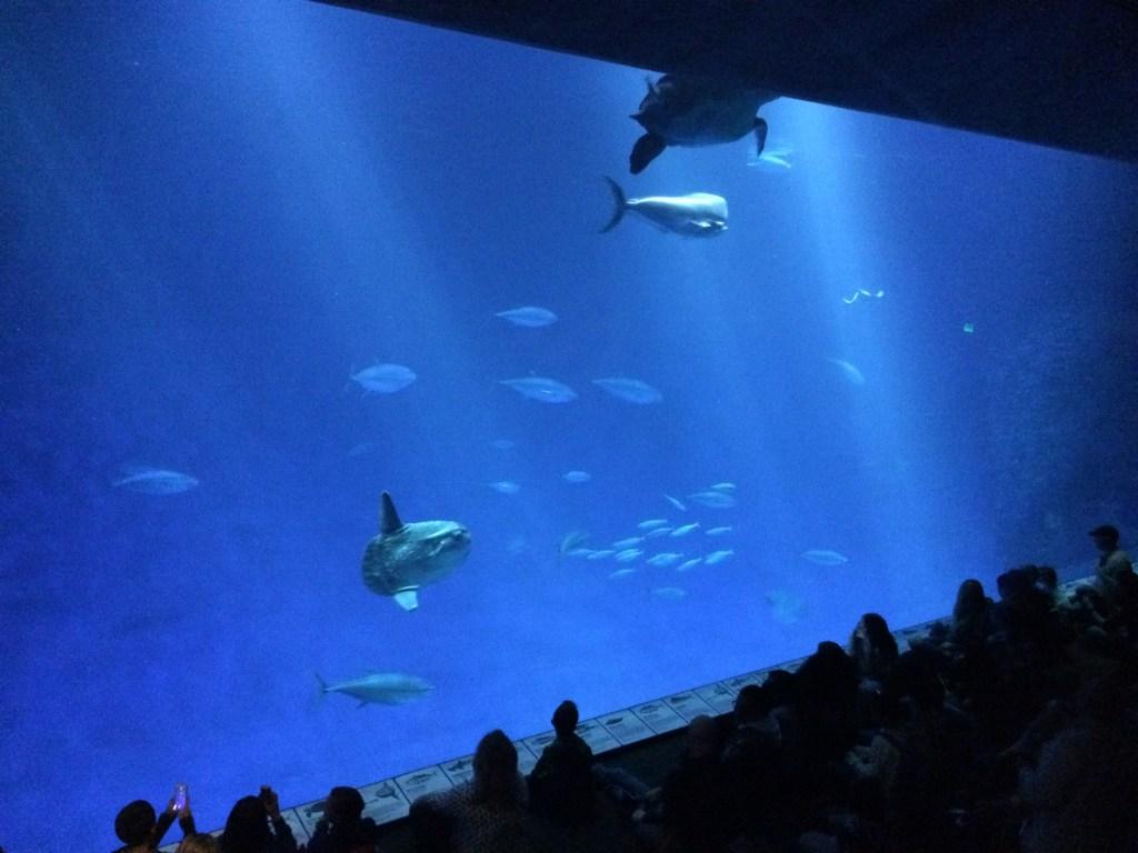 The Open Sea Monterey Bay Aquarium