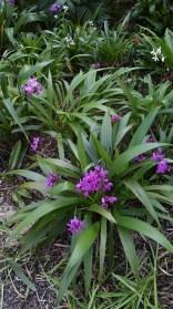 Ground Orchids