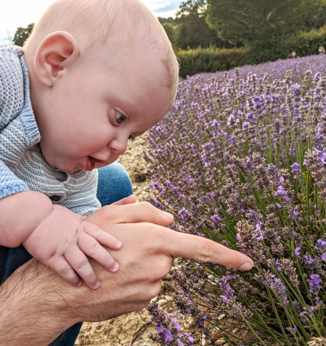 baby close up in the lavender fields at castle farm kent