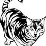 Cat 15