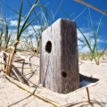 A wood piece is facing the sun and the clouds behind it are engulfing a light blue sky. Sandy Neck Sand Dunes. Cape Cod, MA