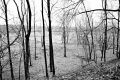 Predator Trees Are Everywhere. Schuylkill River Trail. Valley Forge National Park, PA