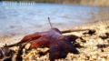 Leaf on the shore of the reservoir
