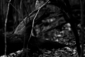 Predator Trees Are Everywhere...EVERYWHERE... Seen at Jones Run trail in Shenandoah National Park. Grottoes, VA