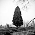 The tree and the cross. Center Street cemetery. Centralia, Pennsylvania