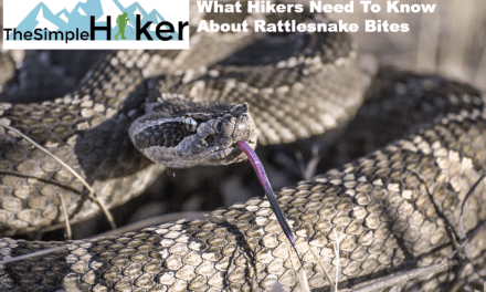 What Hikers Need To Know About Rattlesnake Bites