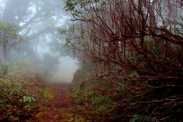 White Road Hike, Kamuela, Hawaii, Waipio Valley, The Big Island, Waimea, Kohala Ditch System, Photography