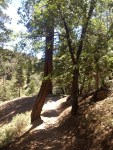 Pine Knot Trail to Grand View Point, Big Bear,San Gorgonio Mountain, San Bernardino National Forest
