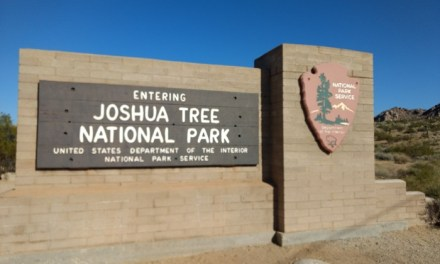 A Visitor's Day Guide To Joshua Tree National Park