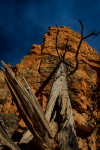 Navajo Loop and Queens Garden Trail