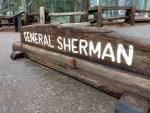 General Sherman Tree Trail