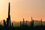 Signal Hill Hiking Trail Guide, Saguaro National Park