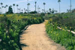 San Dieguito Lagoon Hiking Trail Guide