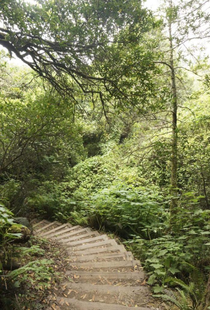 Muir Woods - The Simple Proof