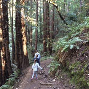 Muir Woods_11