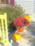 Amish Mums and Uncle Sam's pumpkins