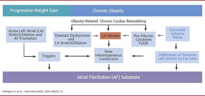 Can Ovine Obesity (Fat Sheep) Teach Us About Atrial Fibrillation?