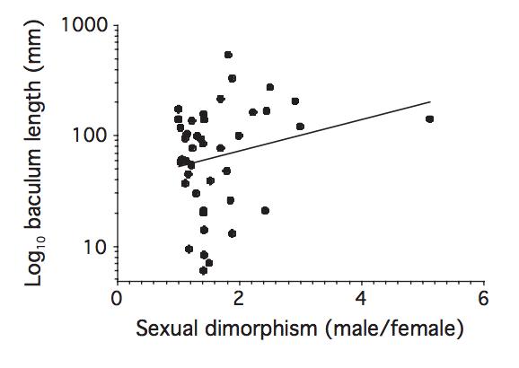VF hypothesis