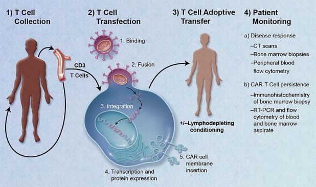 t cell adoptive transfer gene therapy diagram
