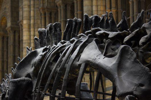 radiometrisk dating af fossiler