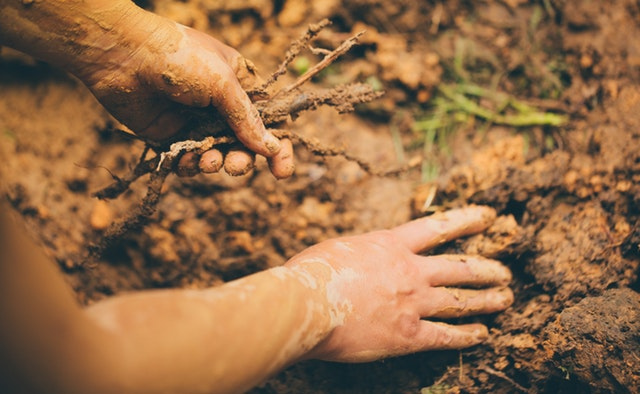 soil hand brown grass roots muddy nature
