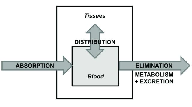 ADME absorption distribution elimination excretion metabolism