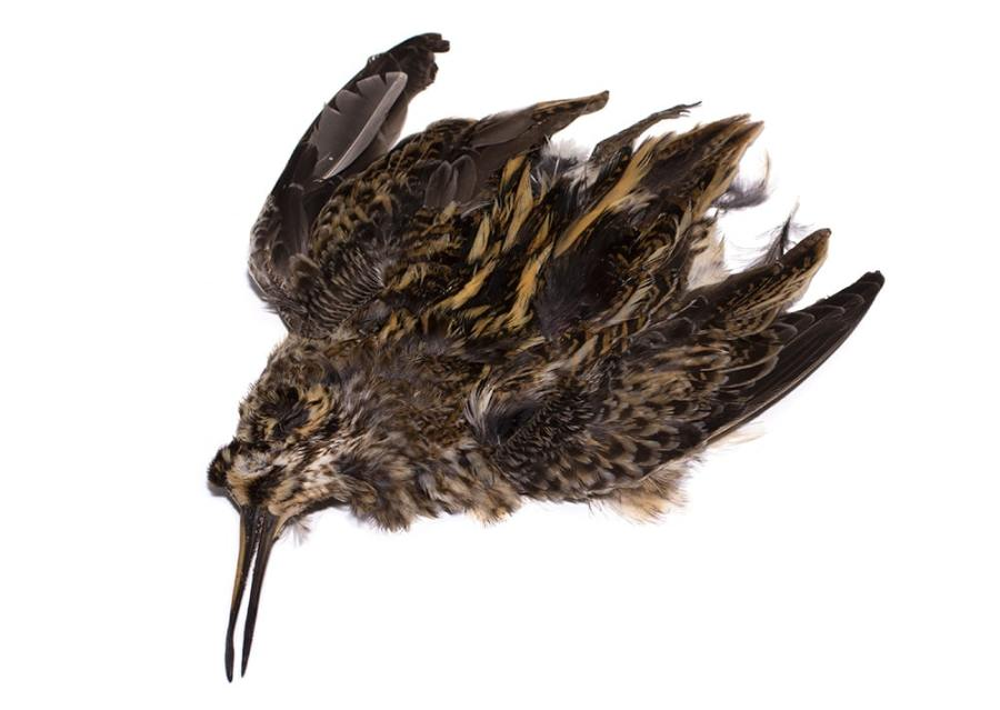 jack snipe hackles for north country spiders