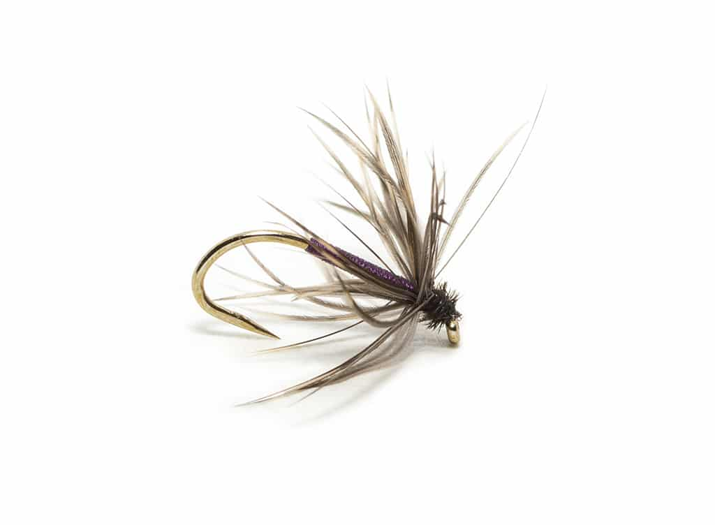 Sylvester Lister's dressing of the Snipe and Purple