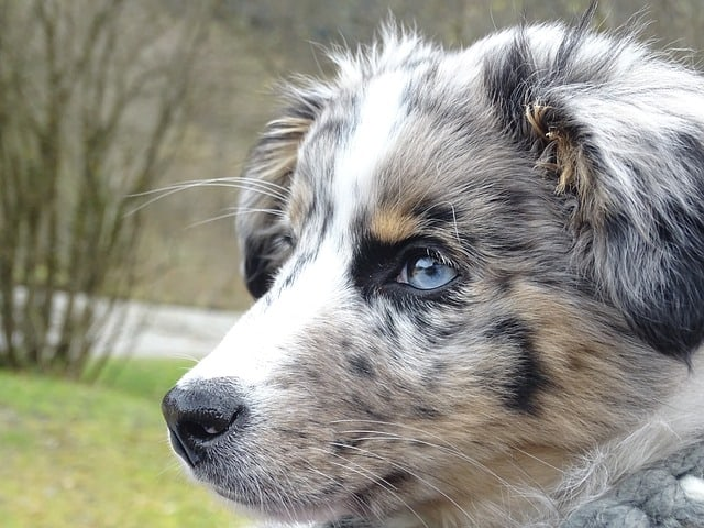 15 stunning dogs with