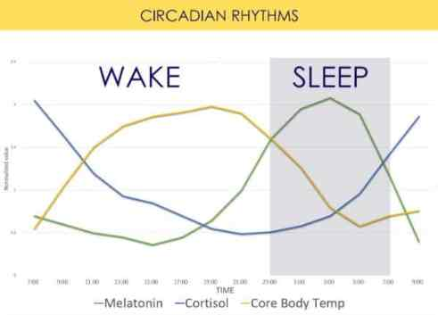 Image result for circadian body temperature