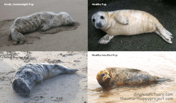 healthy and unhealthy seals
