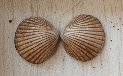 Bilateral symmetry in nature - The Smart Happy Project