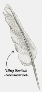 How do birds fly - wing feather